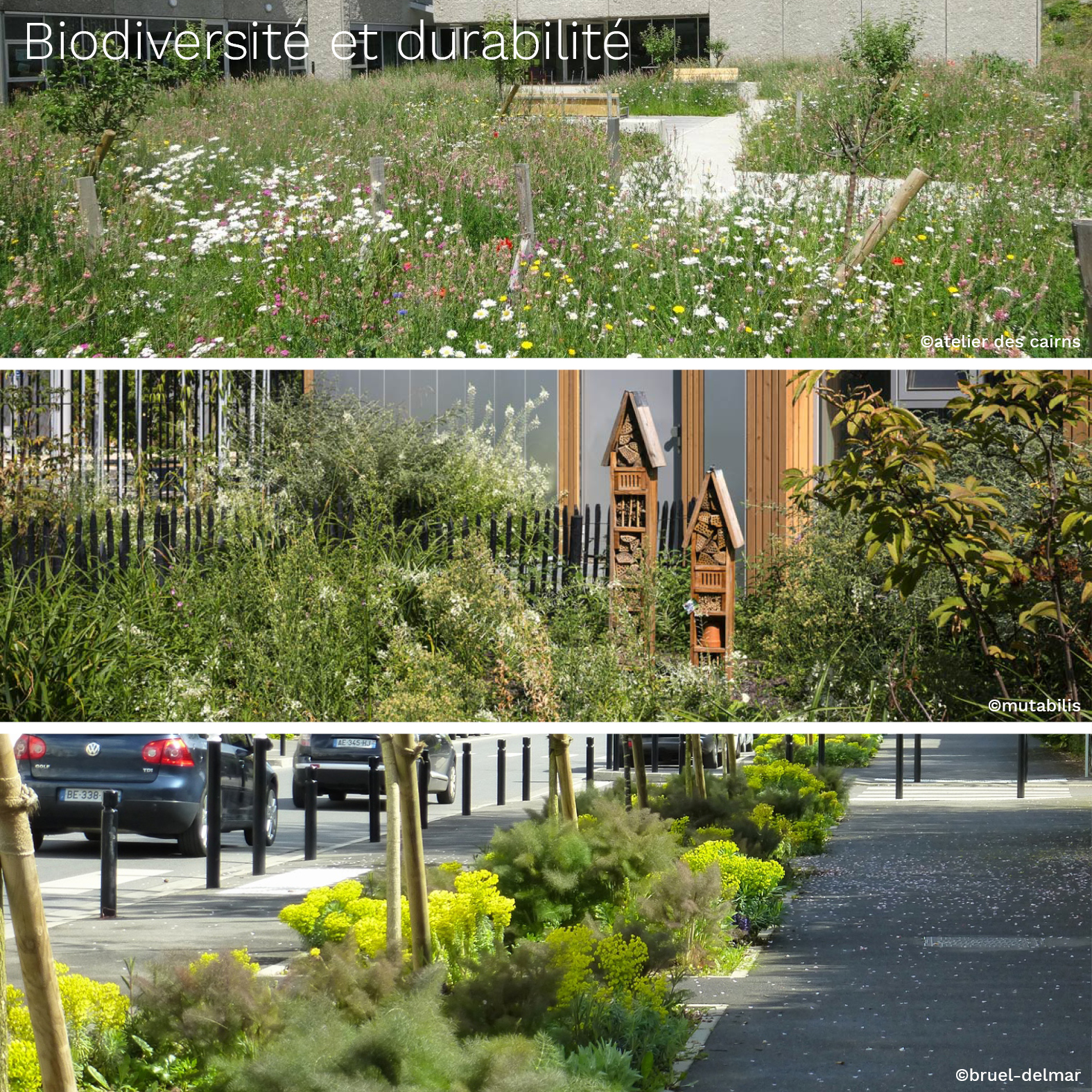 Inspirations biodiversité_Bénédicte Mitaine Paysagiste concepteur